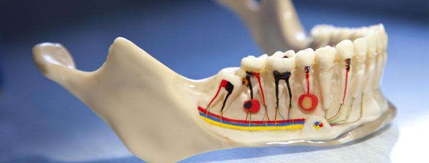 Model zuba