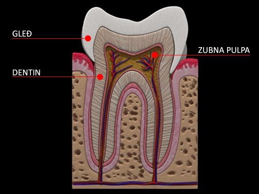Ilustracija strukture zuba